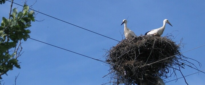 The storks are nesting, Spain