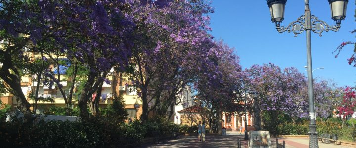 What to see in Isla Canela – Natural attractions – Jacaranda Trees